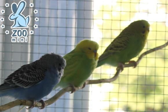 контактный зоопарк (МО) (2)