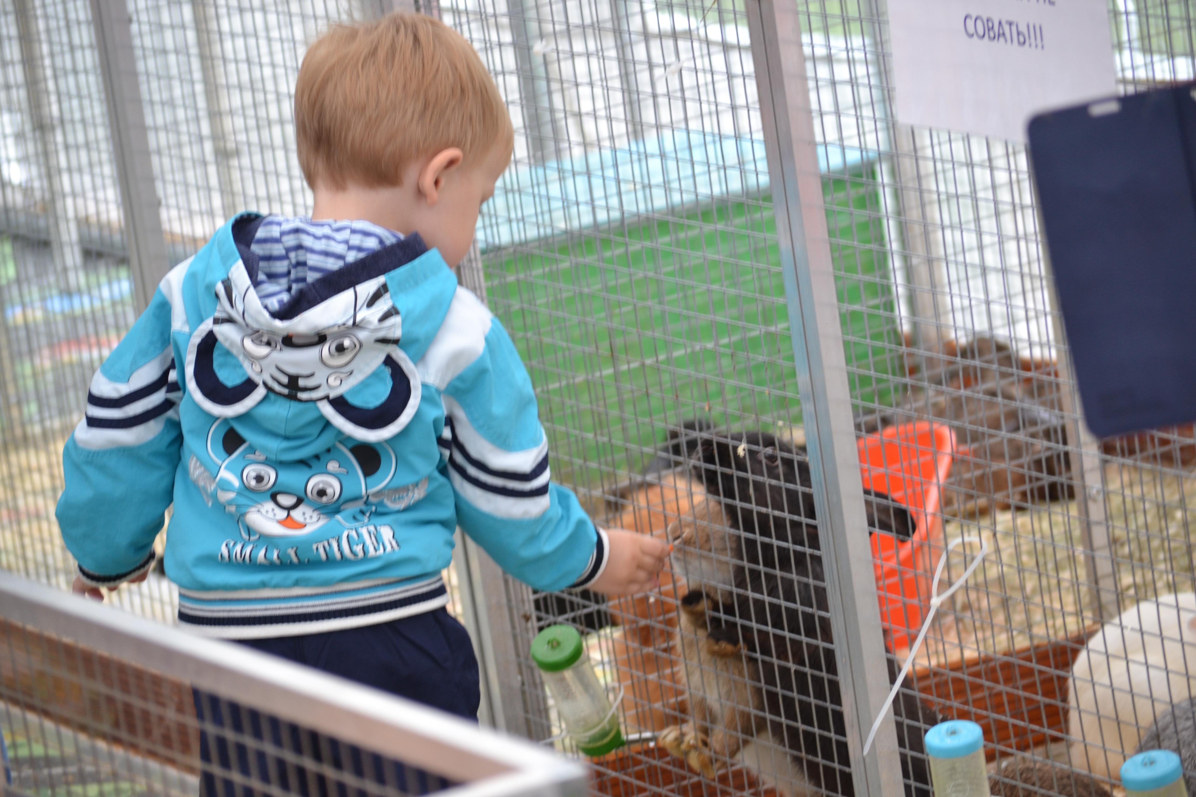 мальчик в контактном зоопарке