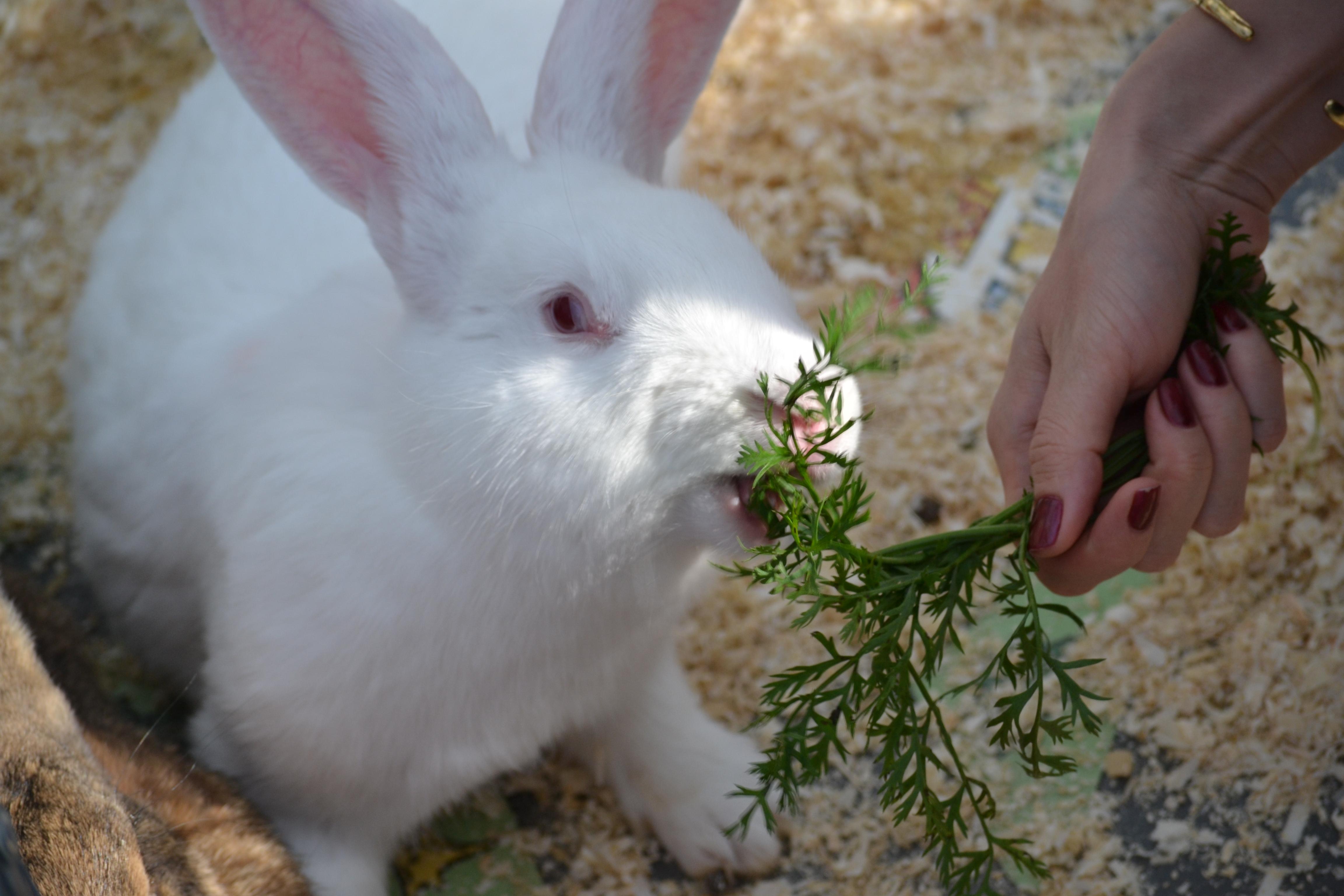 кролик в контактном зоопарке