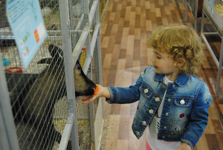девочка кормит козочку в контактном зоопарке