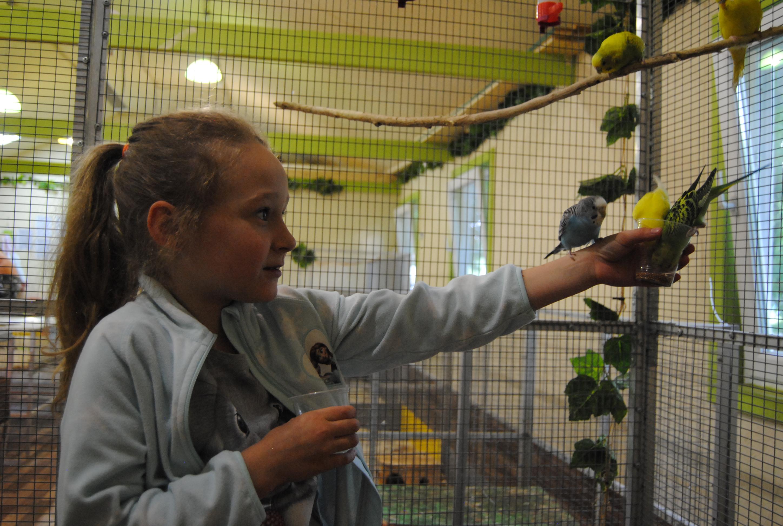 девочка кормит попугаев в контактном зоопарке